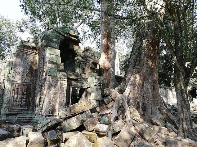 Храм Та Пром в Ангкор Вате