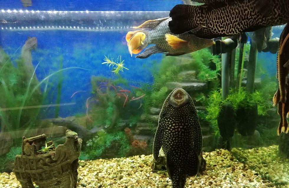 Ресторан Пуаро, аквариум