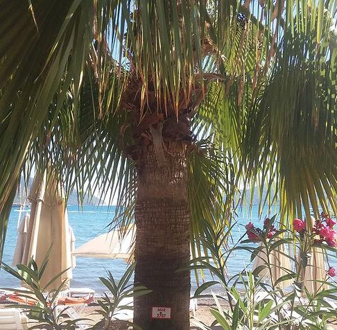 Пальма с номером в Мармарисе
