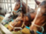 Жашков, конно-спортивный клуб