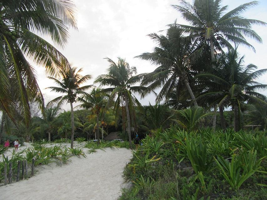 Пальмы на пляже Тулума