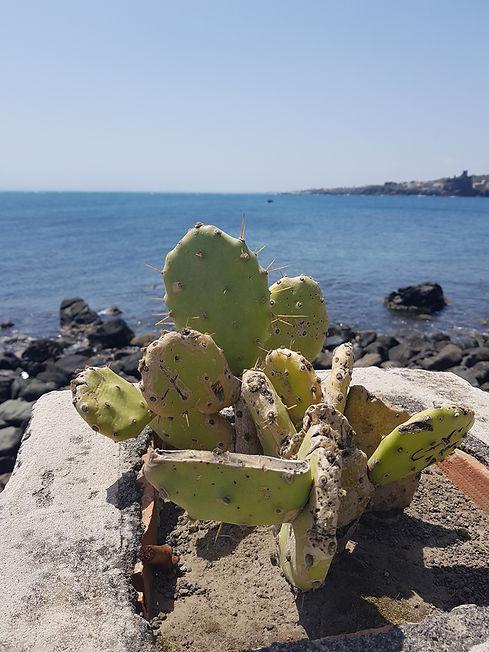 Сицилийский кактус