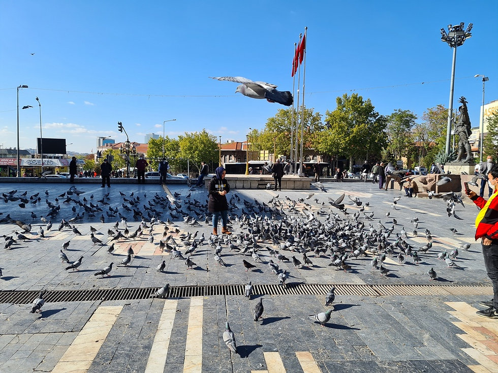 Голуби возле памятника Ататюрку