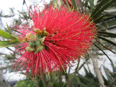 Цветы на Азорах