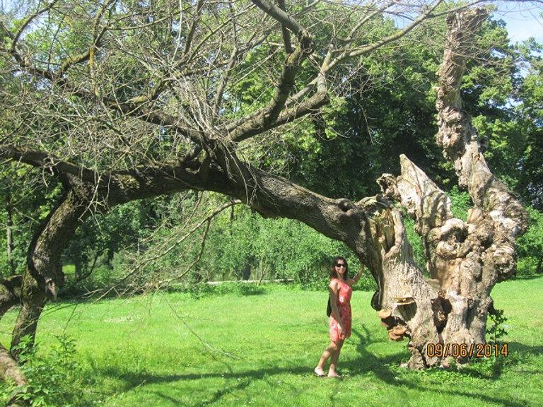 Деревья в Межигорье