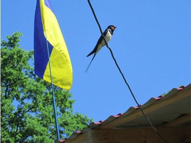 Новаки, Украина