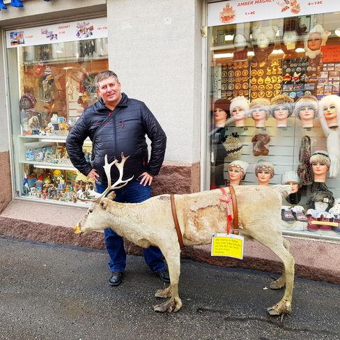 Фотография с оленем в Хельсинки