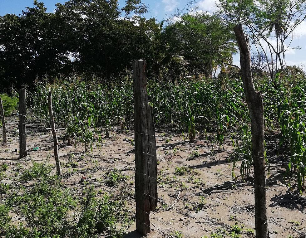 Огород в Мано Хуане