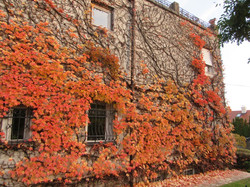 Венгерский дом в осенних листьях