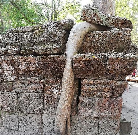 Корень раздвигает камни