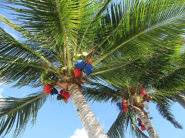 Праздничные цветные кокосы в Канкуне
