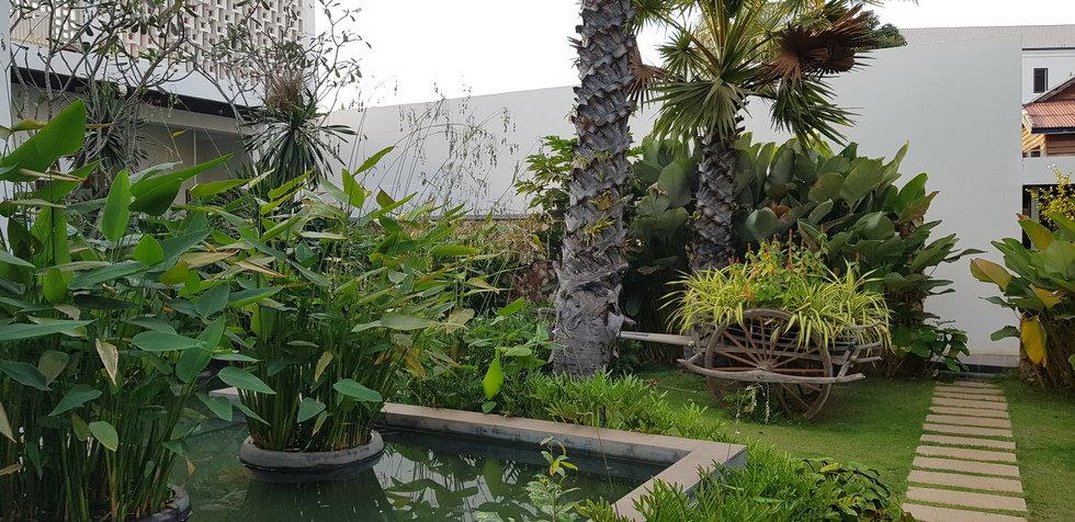 Растения во дворе отеля