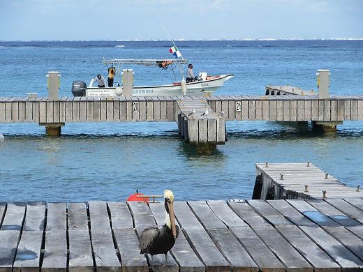 Пеликан на набережной