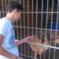 Оленёнок в зоопарке Межигорья