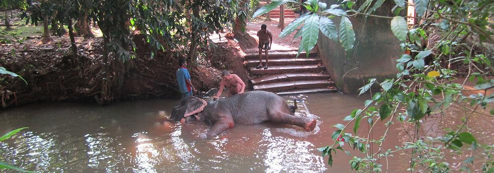 Решил помыть слона