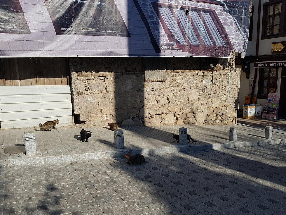 Битва котов в Анкаре