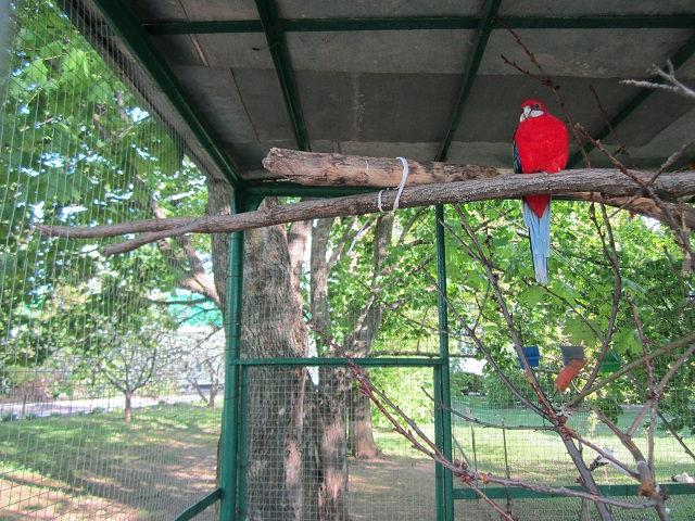 Монастырский птичник