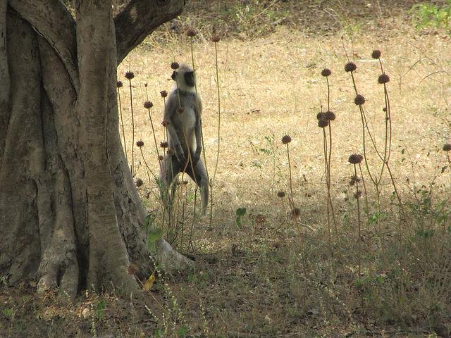 Сафари в парке Яла, Шри-Ланка