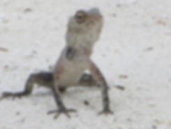 Животное из Хулхумале