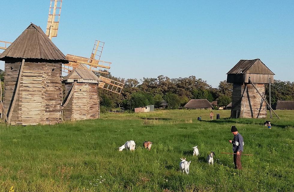 Пирогово, мельницы и пастух
