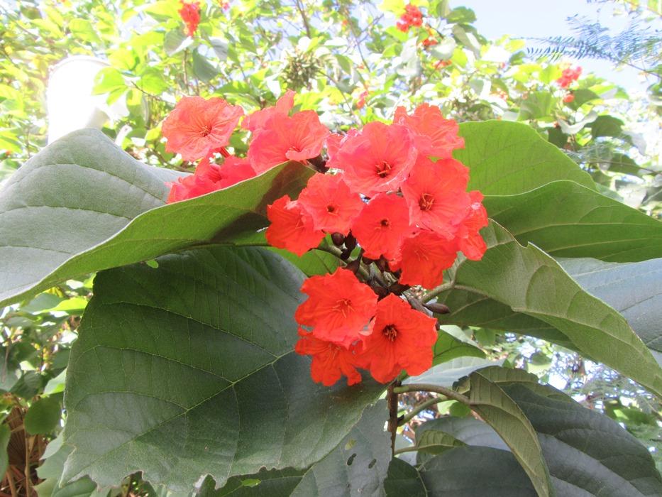 Цветы Мексики