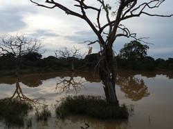 Деревья у озера