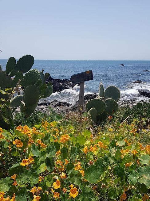 Растения на побережьи Сицилии