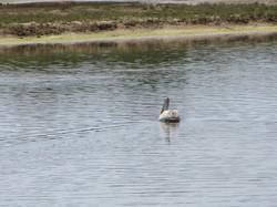 Лишь бы крокодилов не было в озере