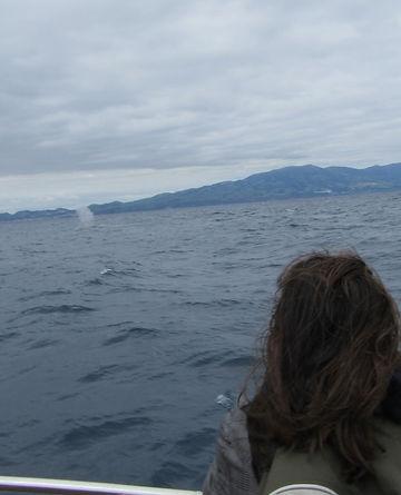 Брызги кита