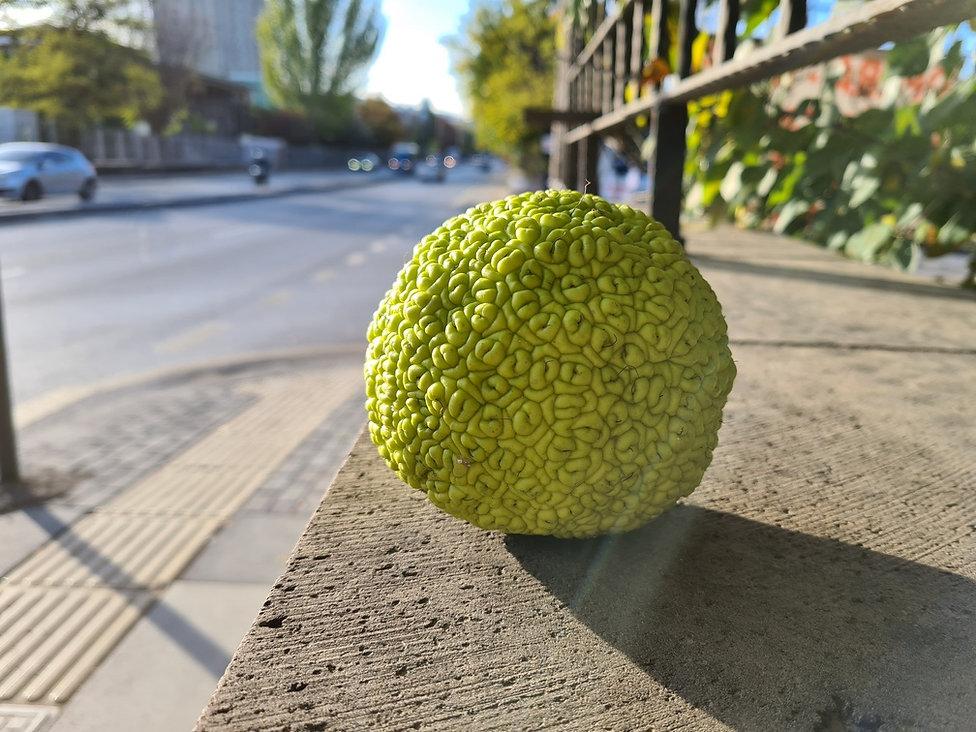 Неизвестній плод упал с дерева