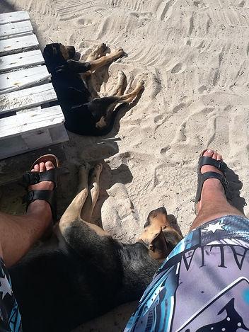 Собаки на пляже Саоны