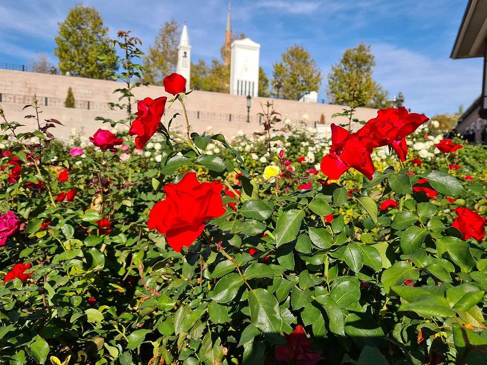 Цветы в начале ноября в Анкаре