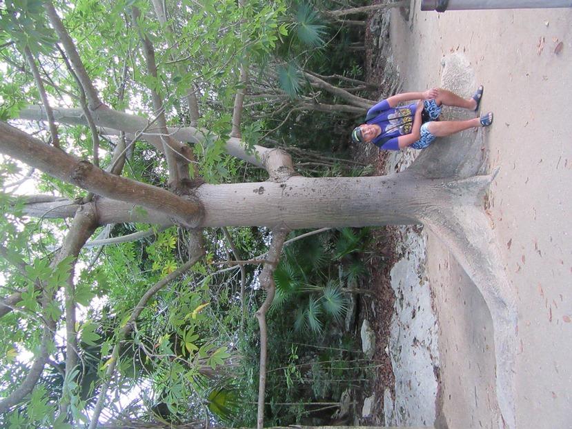 Дерево с нестандартными ветками