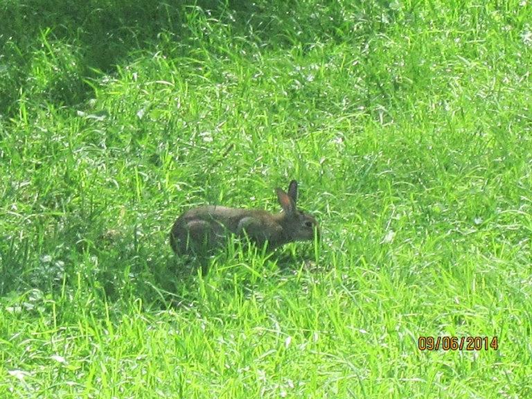 Заяц в Межигорье