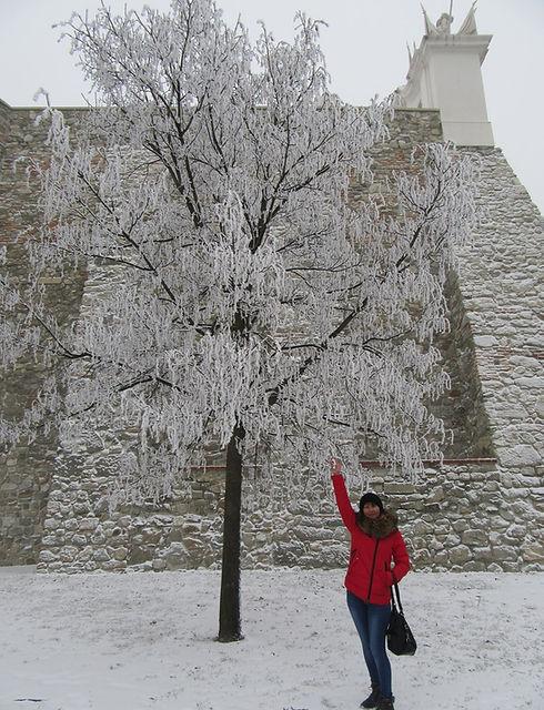 Заснеженные деревья у стен Братиславского града