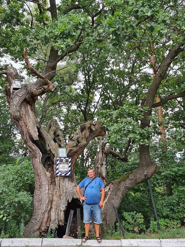 Фотография возле дуба Грюневальда