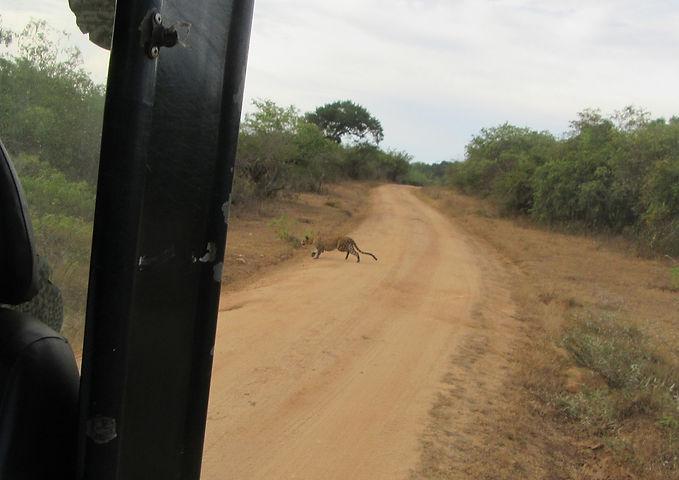 У меня получилось сфотогравировать леопарда