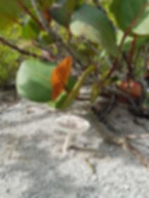 Гриб в джунглях