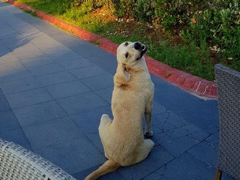 Местная собака-улыбака