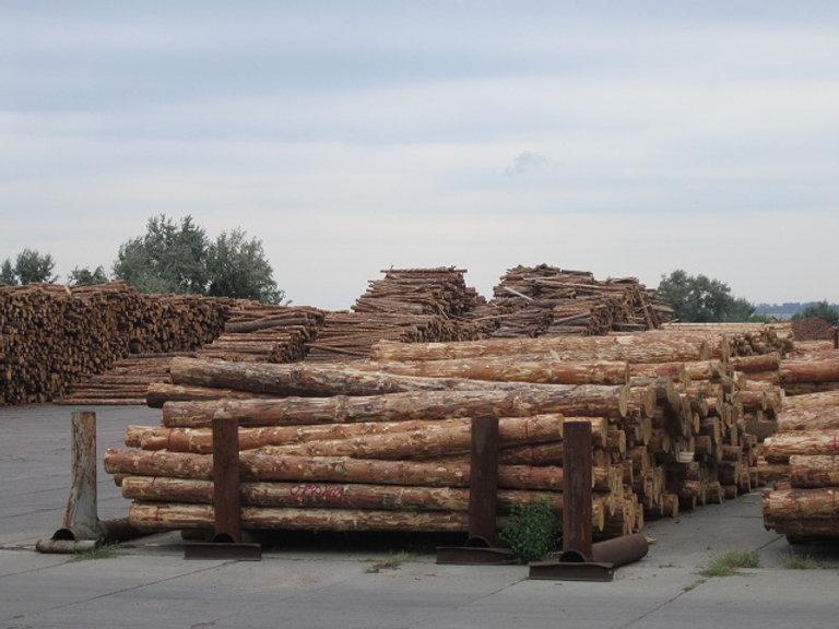 Заготовка древесины идет активно