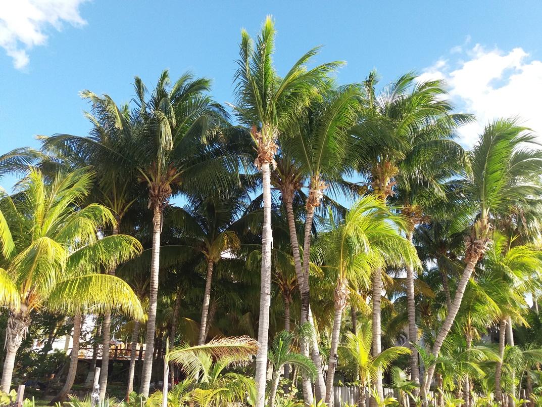 Пальмы вокруг шикарной виллы