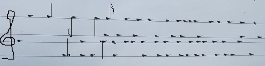 Птицы, они как ноты