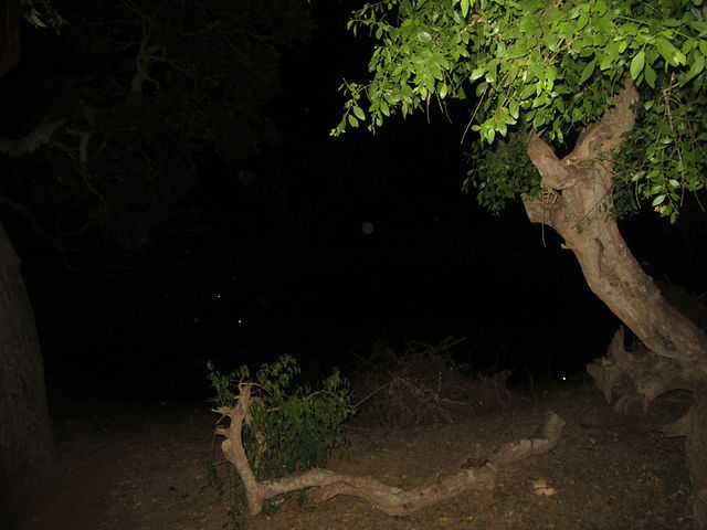 Ночь в парке Яла, Шри-Ланка