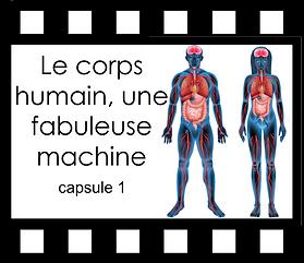 Le corps humain une fabuleuse machine ca