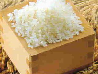 ド根性米 ぜったに倒れない天のつぶ 新米(白米 玄米)