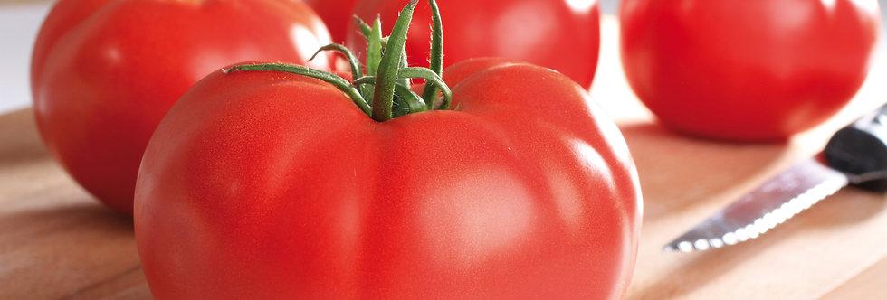 Tomate Supersteack greffée