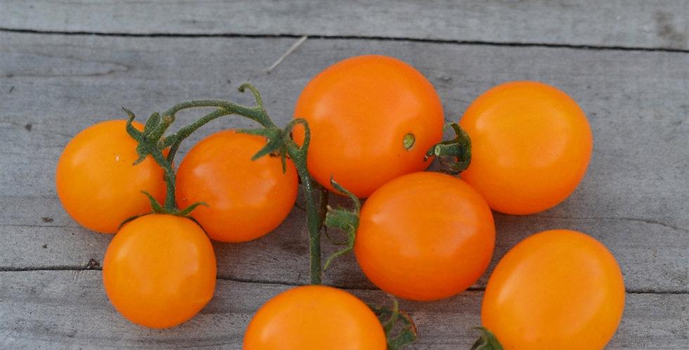 TOMATE cerise Gusta mini orange