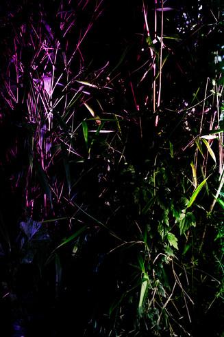 botanic shooting