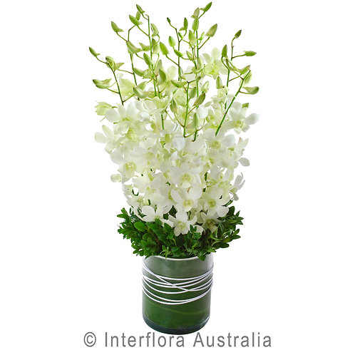 Floral DeVine Hunters Hill Florist Singapore Orchid Vase Daily Delivery Gladesville Woolwich Lane Cove Putney Drummoyne Ryde