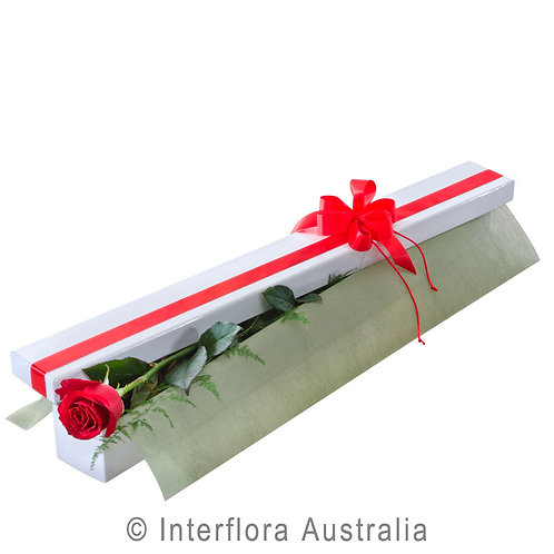 Floral DeVine Hunters Hill Florist Temptation Red Pink White Single Rose Box Gladesville Woolwich Putney Drummoyne Ryde